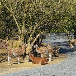 울타리 없는 동물원, 뱅센에서 산책하며 힐링하기