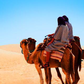 사하라 사막의 관문, '마라케시'에서 낙타 라이딩 체험하기