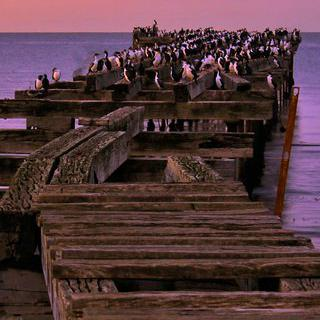 남극으로 향하는 세상의 끝 '푼타아레나스' 여행하기