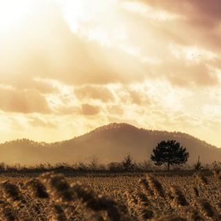 갈대밭에서 불어오는 자연의 소리, '순천'에서 생태 공원 산책하기