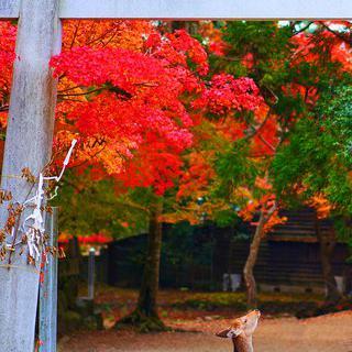 일본의 역사가 살아 숨쉬는 도시