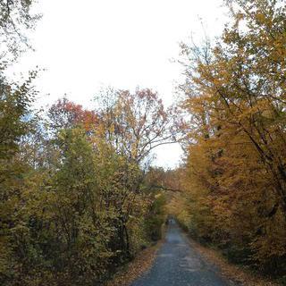 세느강 연인들의 술길, 'Forêt de Sénart' 숲길 걷기