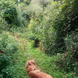 초록으로 우거진 '라쿤 크릭 주립공원'에서 낚시하기
