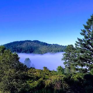 장엄한 숲의 미로, '퓨리시마 크릭 레드우즈 오픈 스페이스 보호지역' 에서 하이킹하기