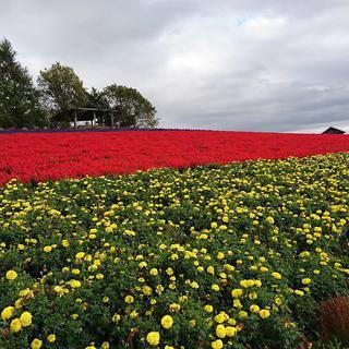 형형색색으로 물든 꽃동산, 'Kanno Farm'에서 인생샷 찍기