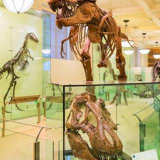인류와 생물 그리고 우주에 관하여, 뉴욕 '자연사 박물관' 탐방하기