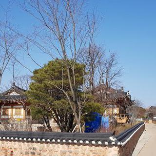 아름다운 한옥들로 가득한 '경주 교촌마을'에서 한복 나들이하기