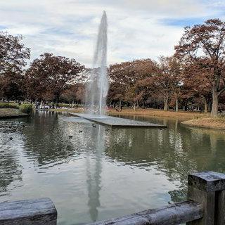 푸른 잔디밭이 펼쳐진 '요요기 공원'에서 피크닉 즐기기