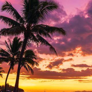 열대의 정취를 담은 '난디'에서 휴양 즐기기