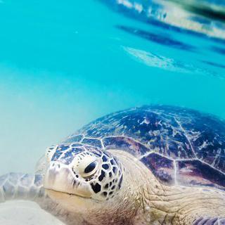 야생의 바다거북을 만날 수 있는 곳,  '히카두와'에서 수영하기