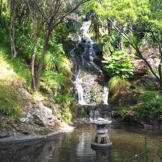 장미가 수놓은 아름다움, '웰링턴 보태닉 가든'에서 케이블카 타기