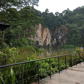 싱가포르에서 가장 높은 언덕, '부킷 티마 자연보호지역'에서 하이킹하기