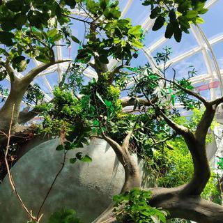 사막 위 아름다운 초록 지대, 'The Green Planet by Meraas'에서 힐링하기
