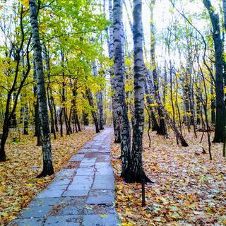 모스크바의 소담스런 숲길, Khimkinskiy Lesopark에서 산책하기