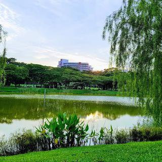 야자수와 아름드리 나무의 조화, 'Punggol Park' 에서 힐링하기