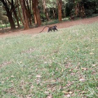 도심 속 원숭이들의 파라다이스, '시티 공원'에서 산책하기