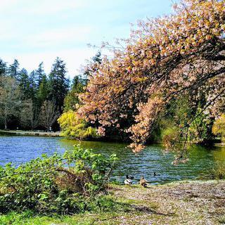 귀여운 다람쥐 출몰지, 평화로운 '밴쿠버 센트럴 공원' 힐링하기