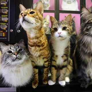 귀여운 고양이들이 정복한 'Республика кошек, котокафе' 커피 마시기