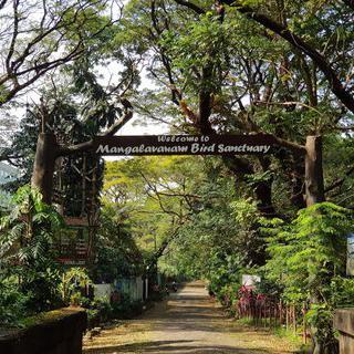 철새들을 위한 녹색 낙원, 'Mangalavanam Bird Sanctuary'에서 힐링하기