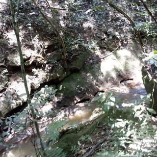 초록이 내뿜는 상쾌함, 'Karura Forest'에서 하이킹하기
