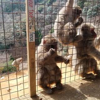원숭이 천국, '몽키파크' 에서 원숭이 먹이 주기