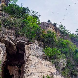 대나무 기차 타고 '바탐방' 박쥐 동굴 탐험하기