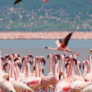 희귀 생물의 보고, '나쿠루 국립 공원' 트레킹하기