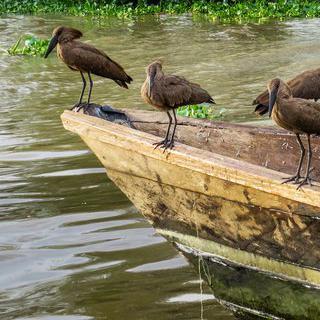 야생 동물의 낙원, '임팔라 공원'에서 사파리 투어 즐기기
