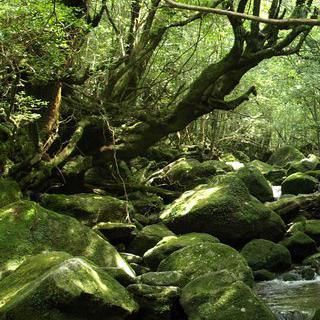 원령공주의 성스러운 배경지, 일본 야쿠섬