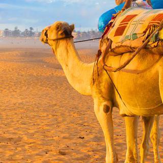 사하라 사막의 파라다이스, 낭만적인 '아가디르'에서 인생 사진 남기기