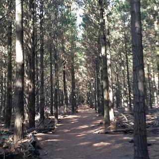 'Bottle Lake Forest Park MTB'에서 자연을 몸으로 느끼며 산악자전거 타기