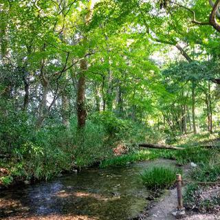 신비스러운 생명의 숲, '타다스노모리'에서 숲길 걷기