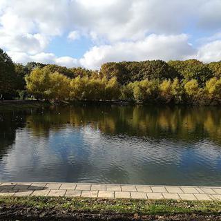 호수와 자연을 조용히 즐길 수 있는 곳, 'Terletskiy Lesopark'에서 숲길 걷기