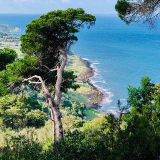 바다 옆에 자리 잡은 숲길 'Park Rmilat'에서 산책하기
