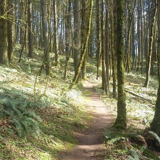 사슴을 만날지도 몰라, 고요한 숲 '마운트 탤버트 파크'에서 하이킹하기