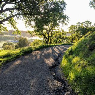 사슴들을 위한 드넓은 언덕, '랜초 샌앤토니오'에서 하이킹하기