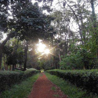 나이로비가 선물하는 위대한 휴식, '더 나이로비 아버리텀'에서 힐링하기