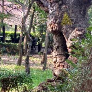 멕시코시티의 청량한 숲, 'Tlalpan National Park'에서 걷기
