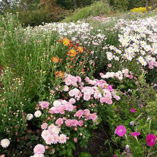 봄의 시작을 알리는 Botanical Garden-Institute FEB RAS에서 꽃구경하기