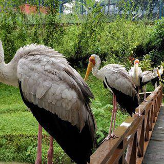 새들의 노랫소리로 가득한 '타만 버엉 쿠알라룸푸르' 관광하기
