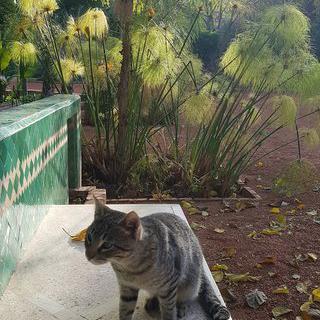 마라케시의 향긋한 오렌지나무, '사이버파크'에서 휴식하기