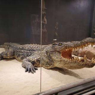 아찔한 악어쇼를 즐기며  'Chalong, Phuket' 'Phuket Crocodile World'에서 시간보내기