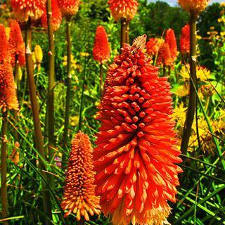 뉴질랜드의 향기로운 정원, '보태닉 가든스'에서 산책하기