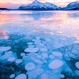 수면 아래의 얼음 거품, 'Abraham Lake' 사진 찍기