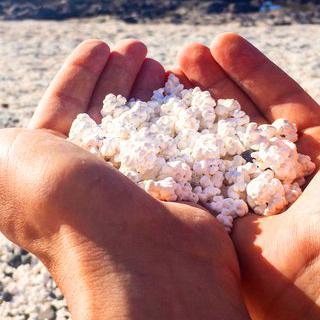 해변을 가득 메운 팝콘, 'Popcorn Beach'에서 사진 찍기
