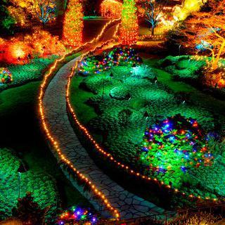 화려하게 빛나는 겨울밤, '이월드 별빛 축제' 야경 감상하기