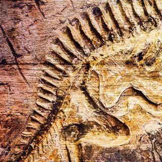 공룡의 흔적을 간직한 '다이너소 국가 기념물'에서 화석 만지기