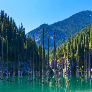 나무가 잠긴 호수, 'Kaindy'에서 사진 찍기