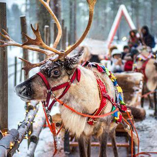 산타클로스 일일 체험, 'Santa Claus Reindeer'에서 순록 썰매 타기