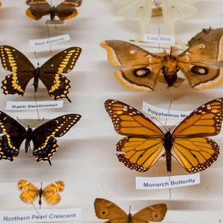 툴루즈의 자연사 박물관에서 나비 전시 보기